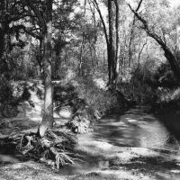 Southlake sits in a geographic region thick with blackjack and post oak trees and artesian springs and was acknowledged by 19th century cartographers as the Cross Timbers. This 2004 photo was taken at the Bob Jones Nature Center. Courtesy Bob Koontz